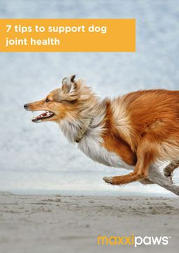 maxxipaws 7 Tips to Support Dog Joint Health