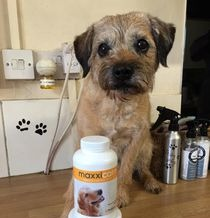 maxxicalm non drowsy calming tablets for dogs are working for Ted the dog