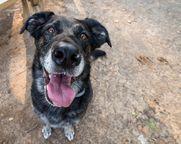happy dog with hear murmur treated with maxxicardio