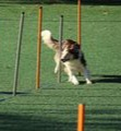 maxxicardio for agility dogs