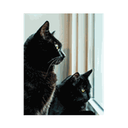 Two adult rescue cats with liver enzymes back to normal after using maxxiSAMe SAM-e supplement for cats