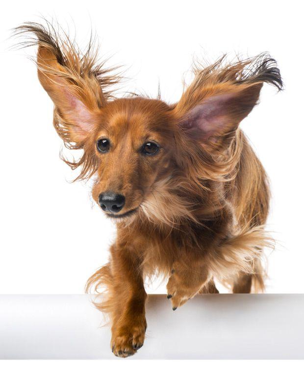 maxxicardio hearth health supplement jumping dog