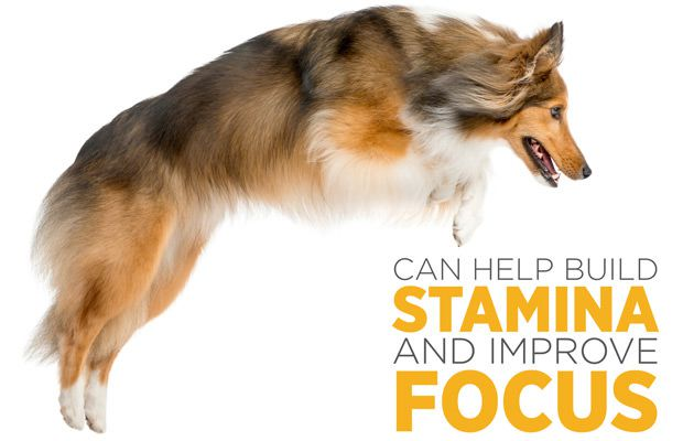 maxxicardo helps build stamina and focus in dogs