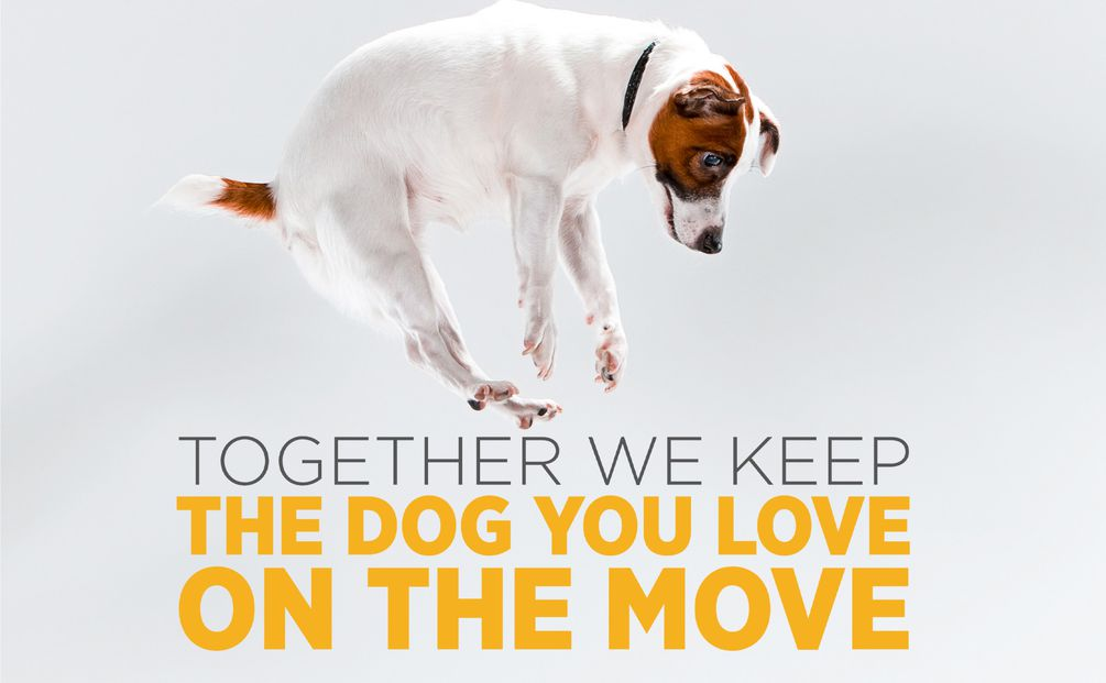 maxxiflex+ dog joint supplement helps to keep dogs active for longer
