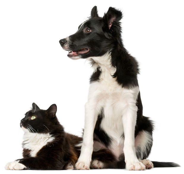 maxxiUtract dog and cat with urinary tract infection