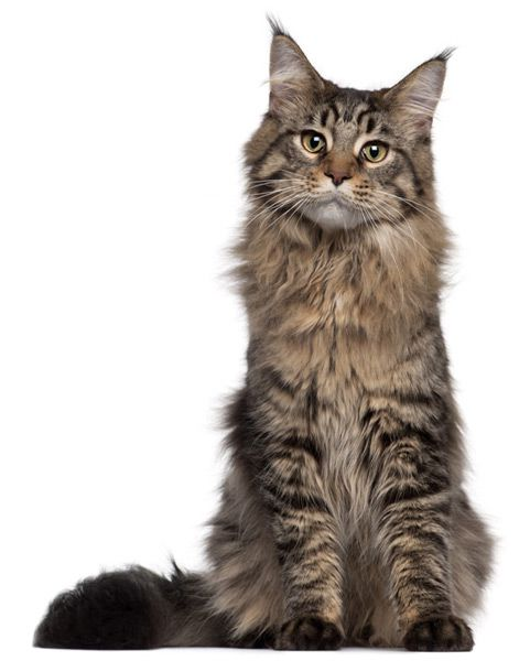 maxxiUtract for cats with urinary tract infection