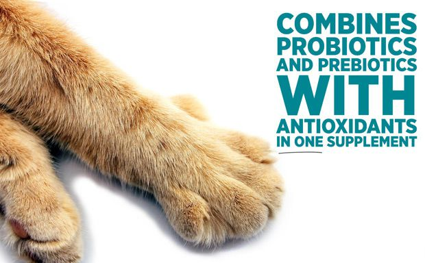 maxxidigest+ best probiotics for cats as probiotics proven to survive the feline acidic stomach environment