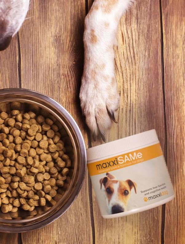 Dog eating food with maxxiSAMe liver support for dogs