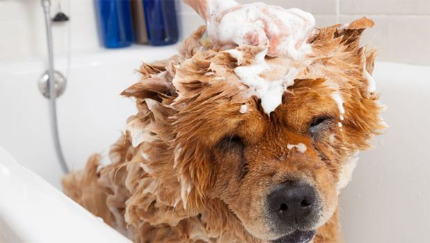 Calm dog having bath