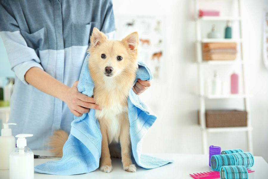 Calm dog at dog grooming saloon thanks to maxxicalm natural calming aid for dogs that helps dog cope better in stressful situations