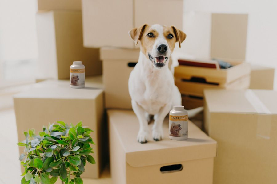 Calm happy dog on moving house boxes with bottles of maxxicalm calming tablets for dogs