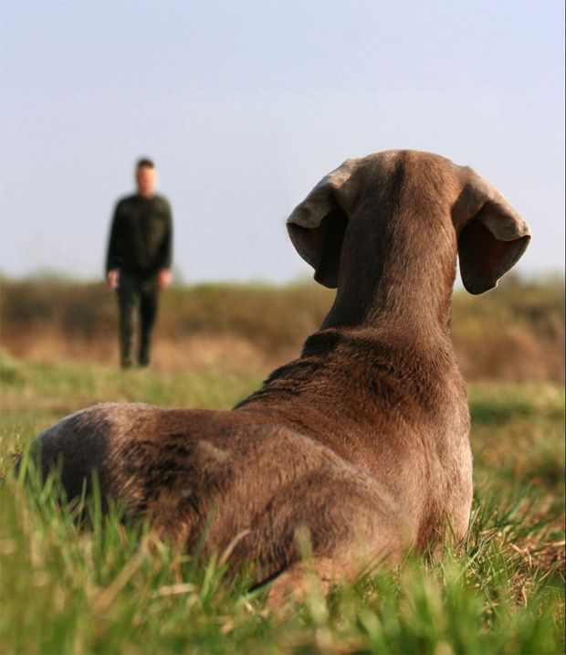 Dog training made easier with maxxicalm calming tablets for dogs