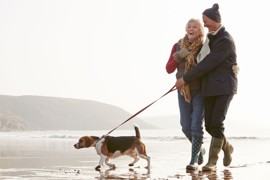 Happy dog owners and healthy dog using maxxiflex+ joint supplement for dogs on a wallk on the beach