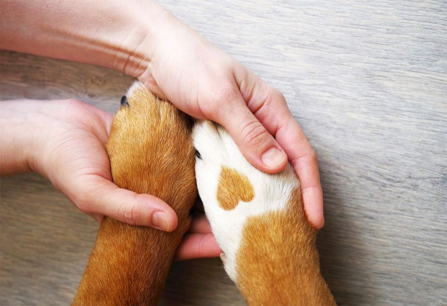 Dog owner holding dogs with heart paw