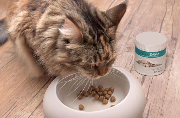 Cat with liver disease eating food with maxxiSAMe liver supplement for cats from maxxipaws