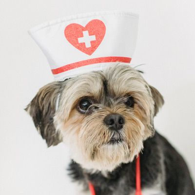 How to treat UTI in dogs