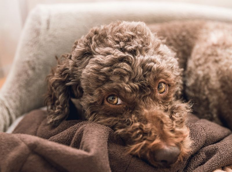 common causes for urinary incontinence in dogs