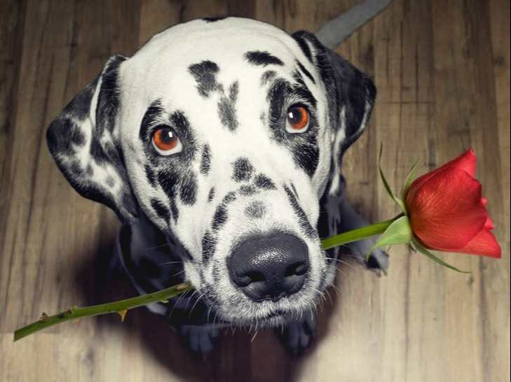 Dogs love is priceless just like their heart