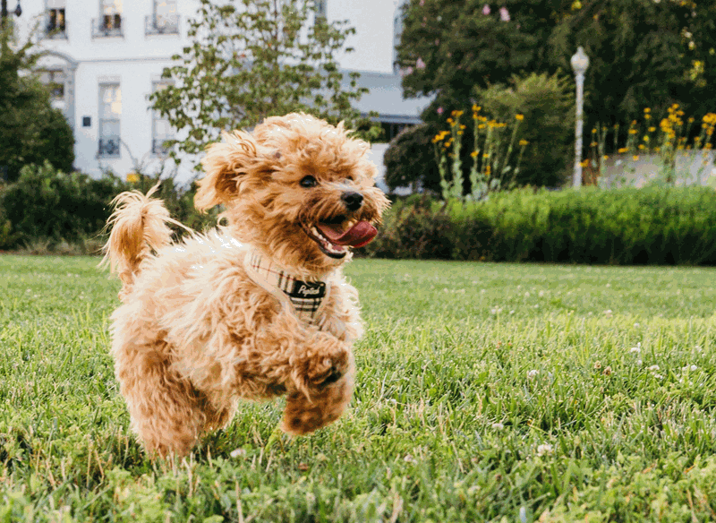 Preventing dog joint problems helps to keep dogs happy and healthy