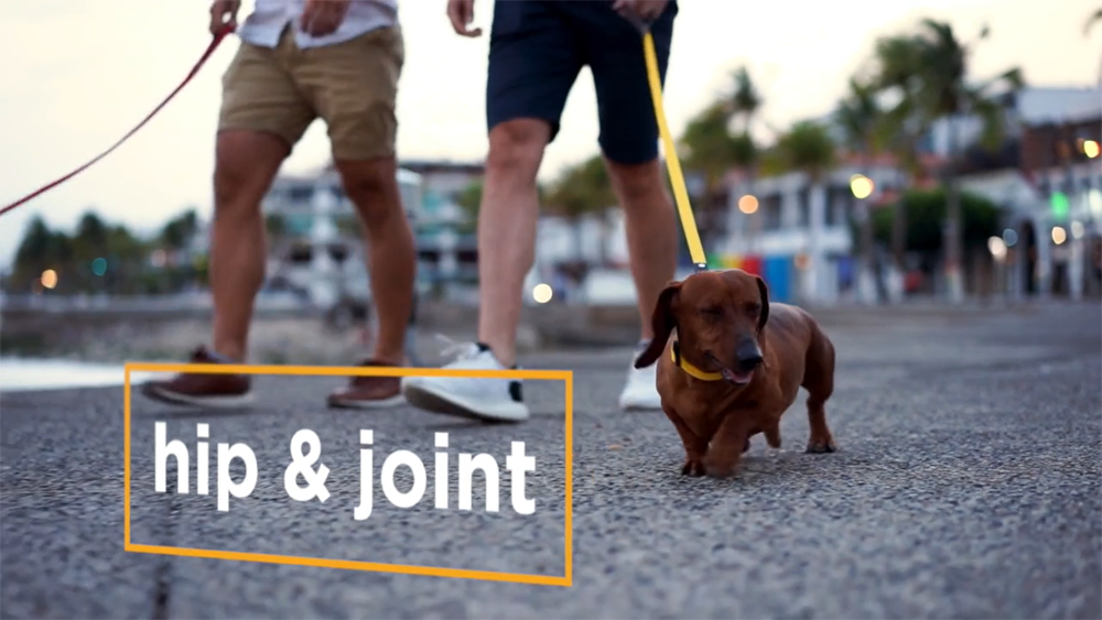 Dogs with arthritis need to keep on moving and maxxiflex+ can ease joint pain and ease mobility