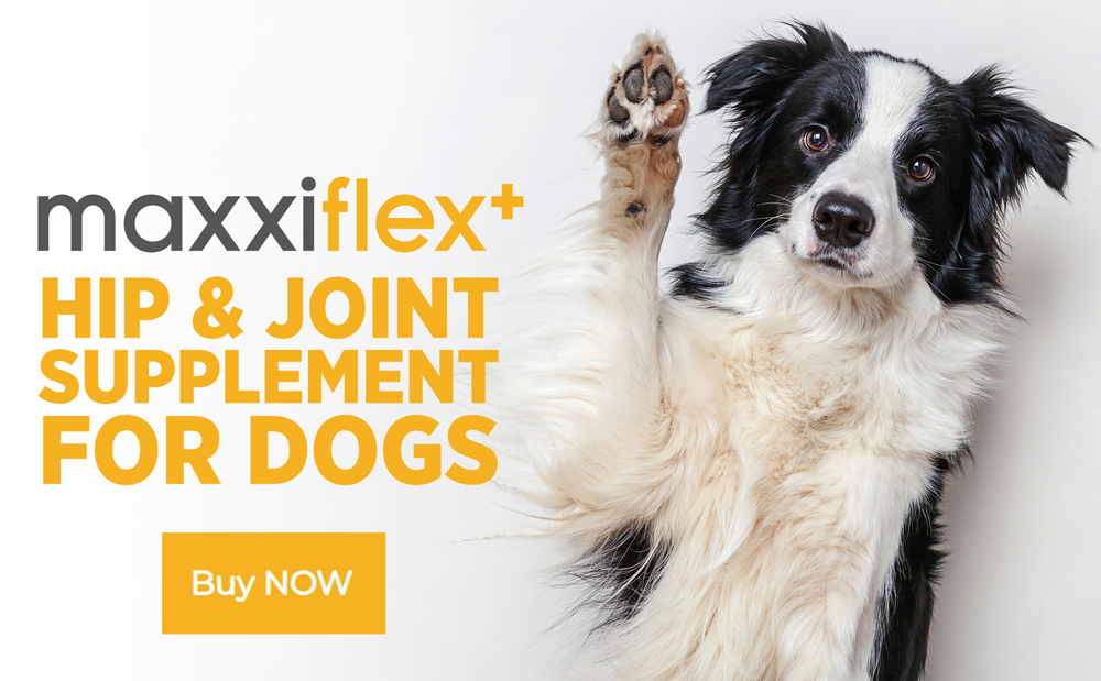 Buy maxxiflex+ hip and joint supplement for dogs today