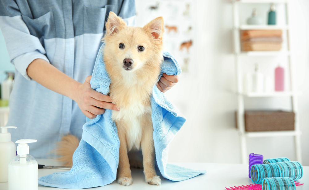 Dog with fear of grooming salons