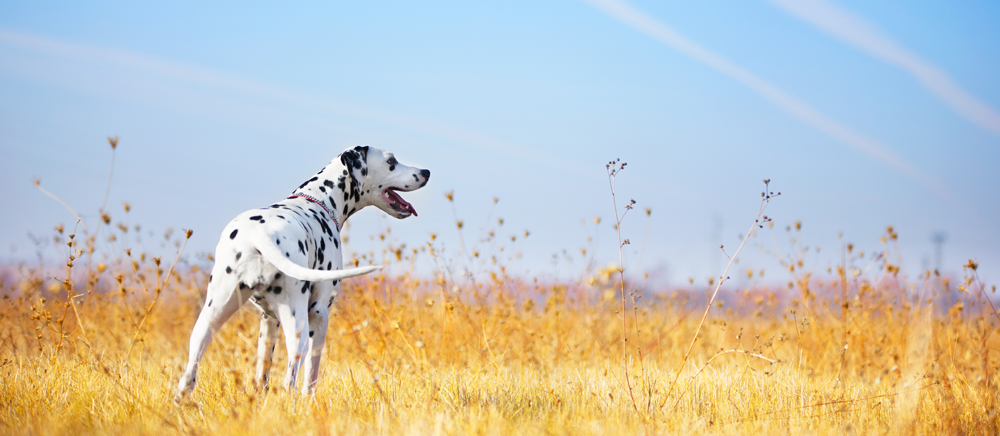 Happy healthy dog in a field
