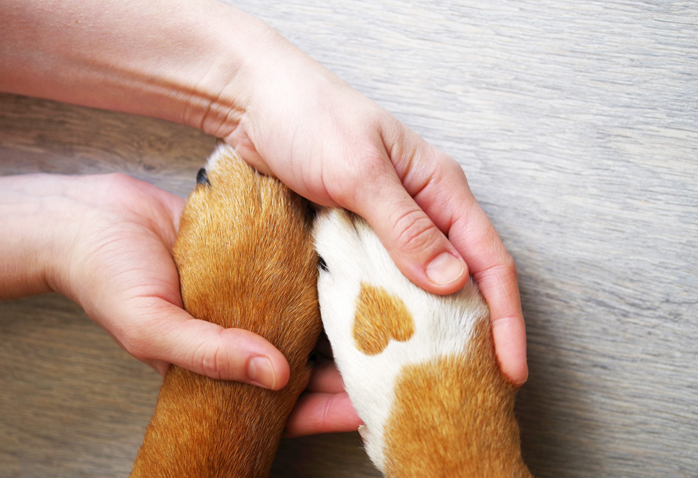 Dog owner holding his dogs paws