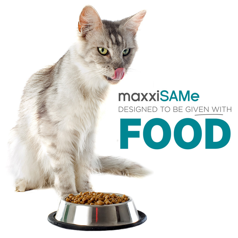 maxxiSAMe liver and cognitive supplement for cats given with food