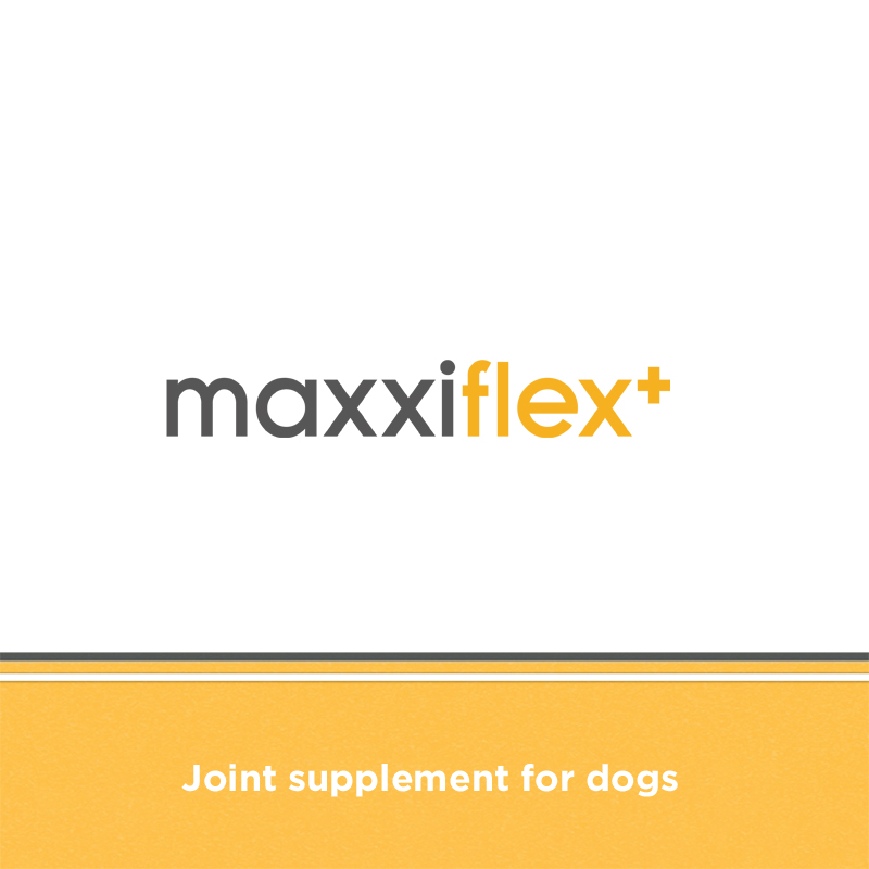 Canine glucosamine, chondroitin, MSM, hyaluronic acid, devil's claw, turmeric dog joint supplement