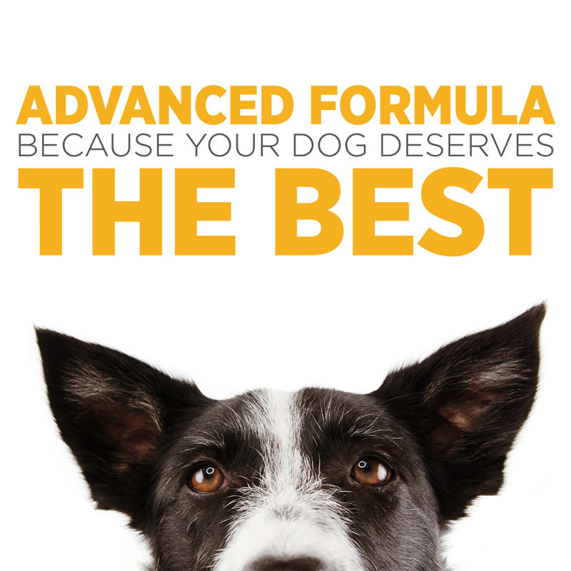 maxxiflex palatable joint tablets for dogs formulated for results