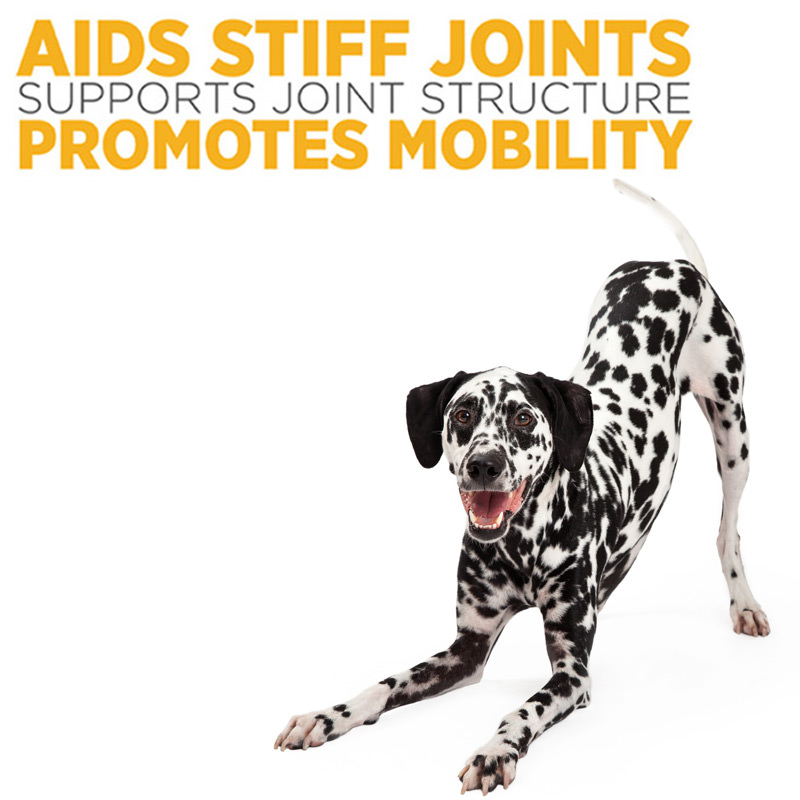 maxxflex joint supplement supports dogs bone structure and can help with dog arthritis