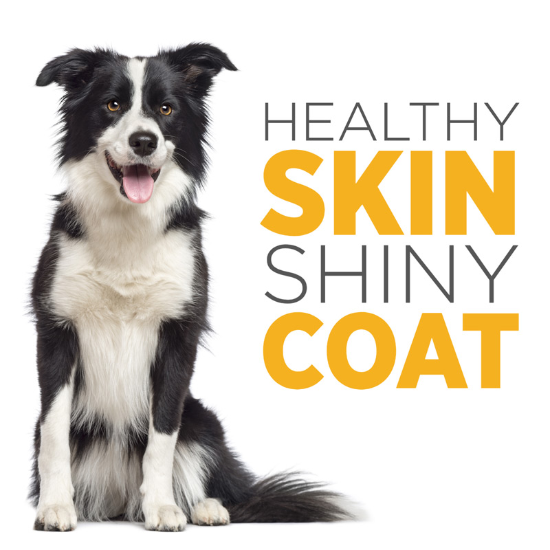 maxxiomega oil for dogs for heatlhy skin and shiny coat