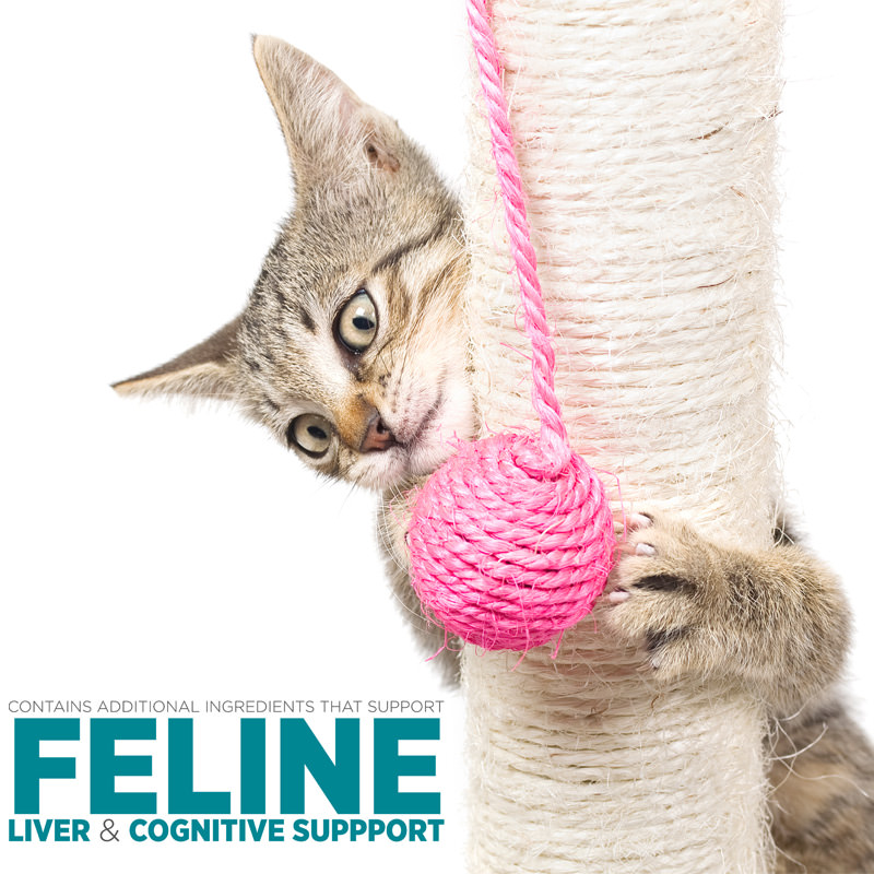 maxxiSAMe hepatic and brain support for cats