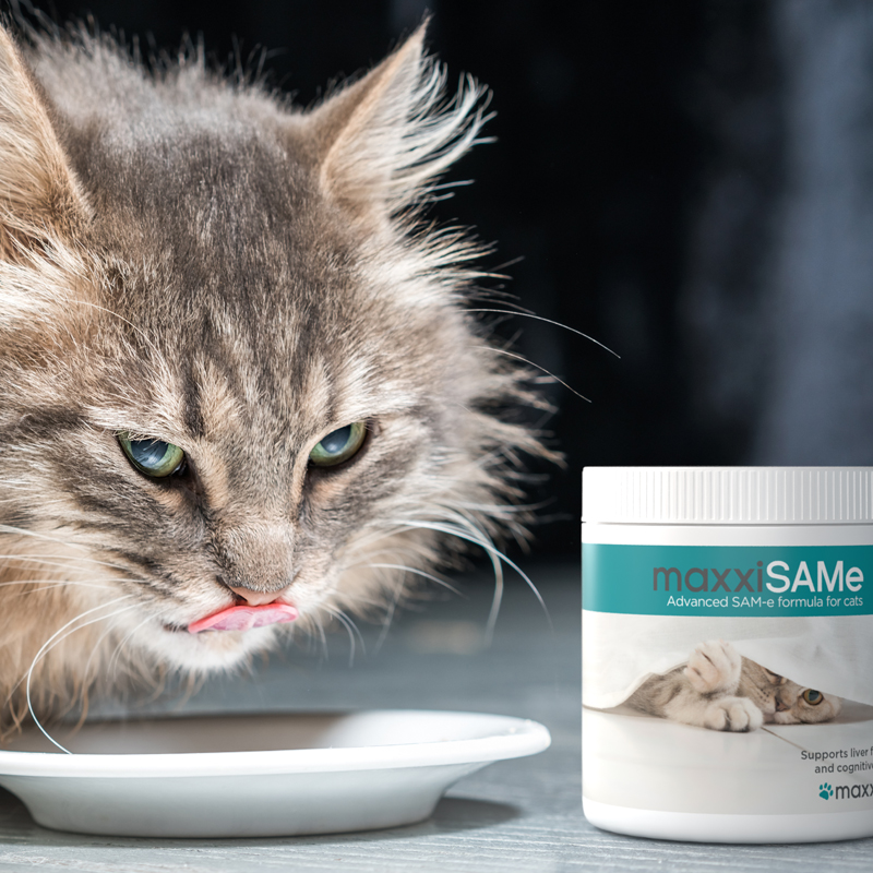 maxxiSAMe-SAM-e-supplement-for-cats-given-with-food