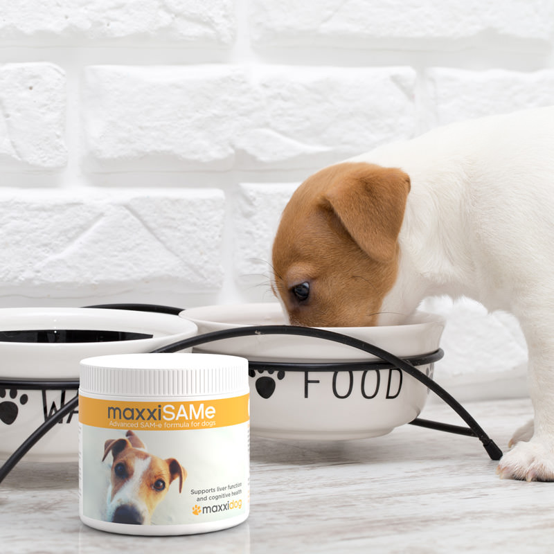 maxxiSAMe powder for dogs can be given with food