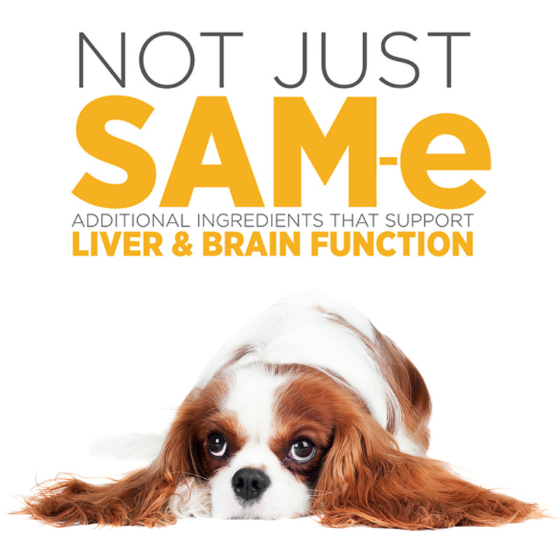 maxxiSAMe best liver and cognitive support ingredients for dogs
