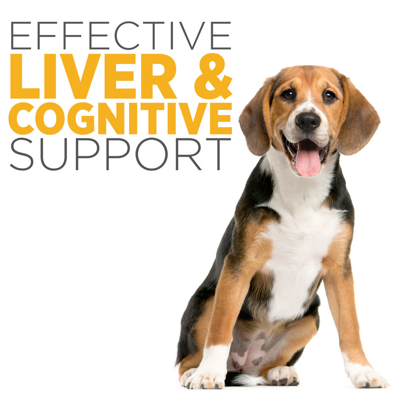 maxxiSAMe advanced liver and cognitive support for dogs