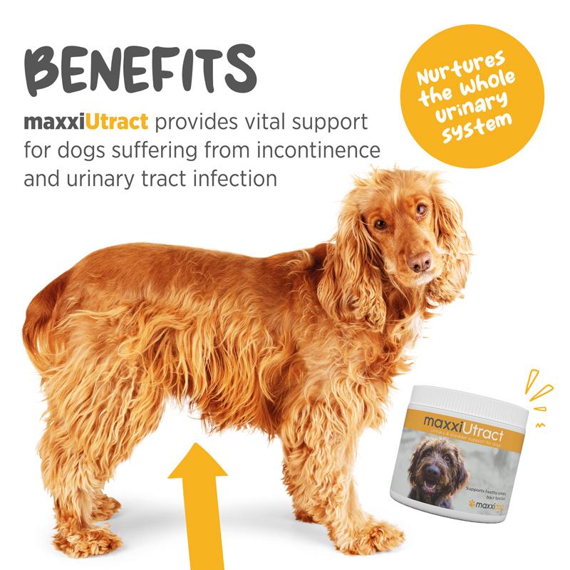 Canine bladder support