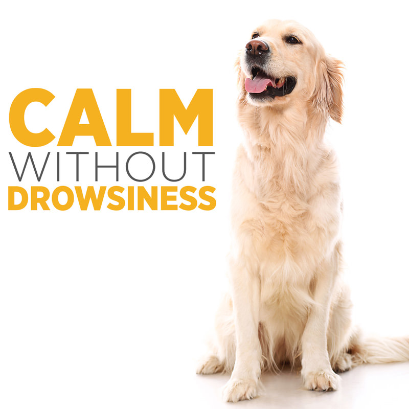 maxxicalm non drowsy calming aid for dogs