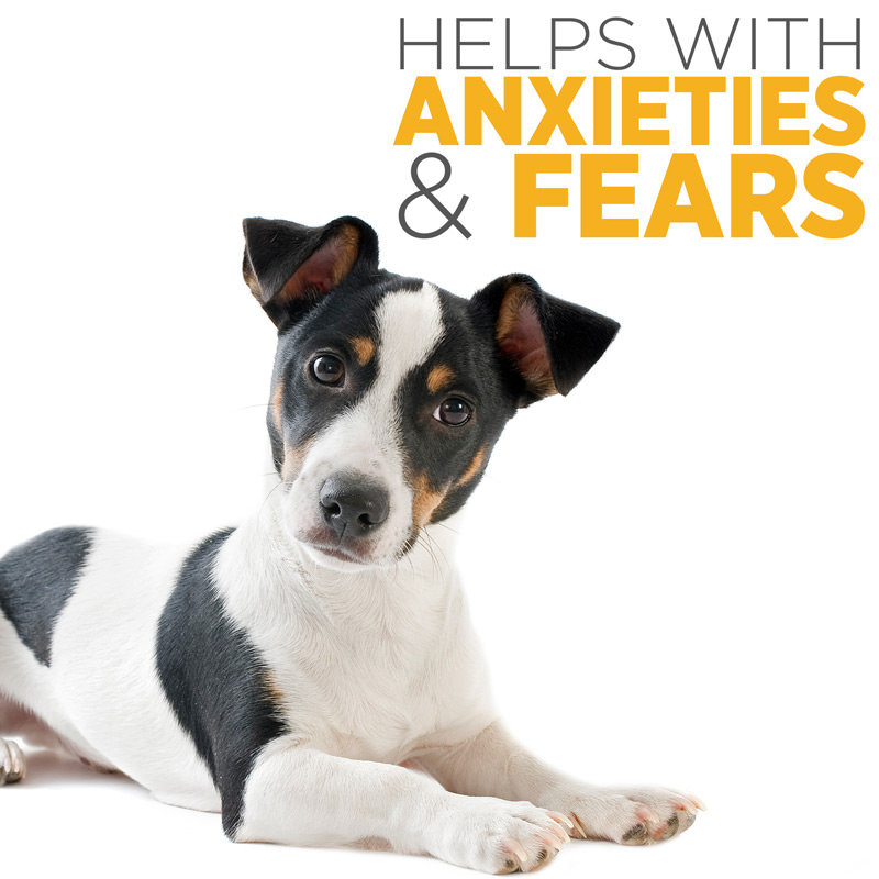 maxxicalm calming supplement for anxious nervous and fearful dogs