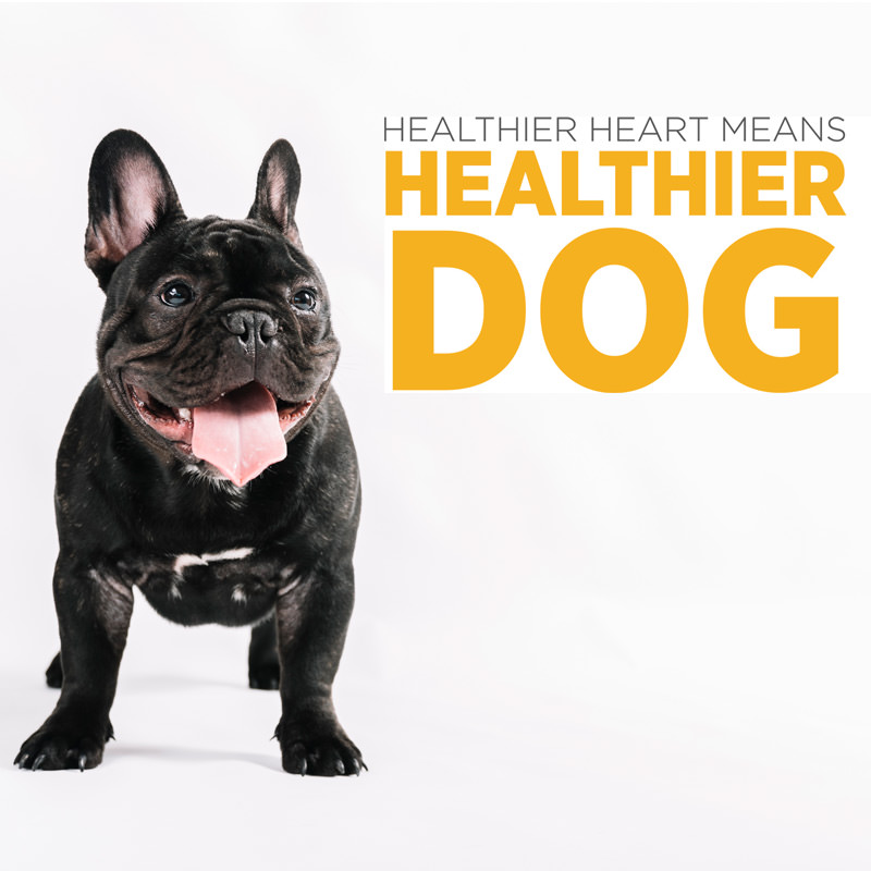 maxxicardio hearth health supplement for dogs