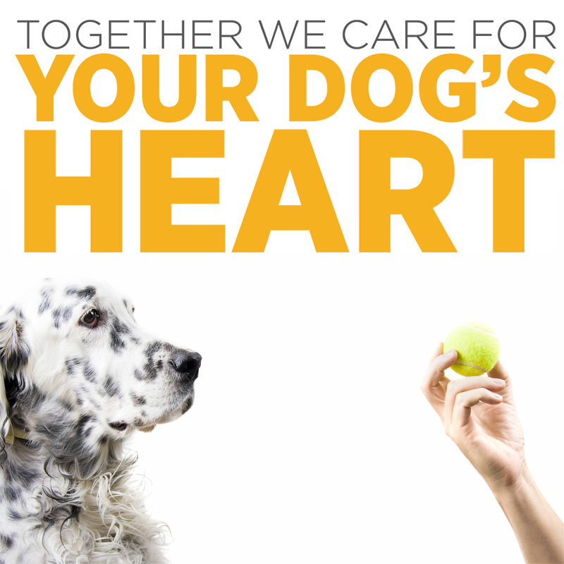 maxxicardio cardio and vascular supplement for dogs