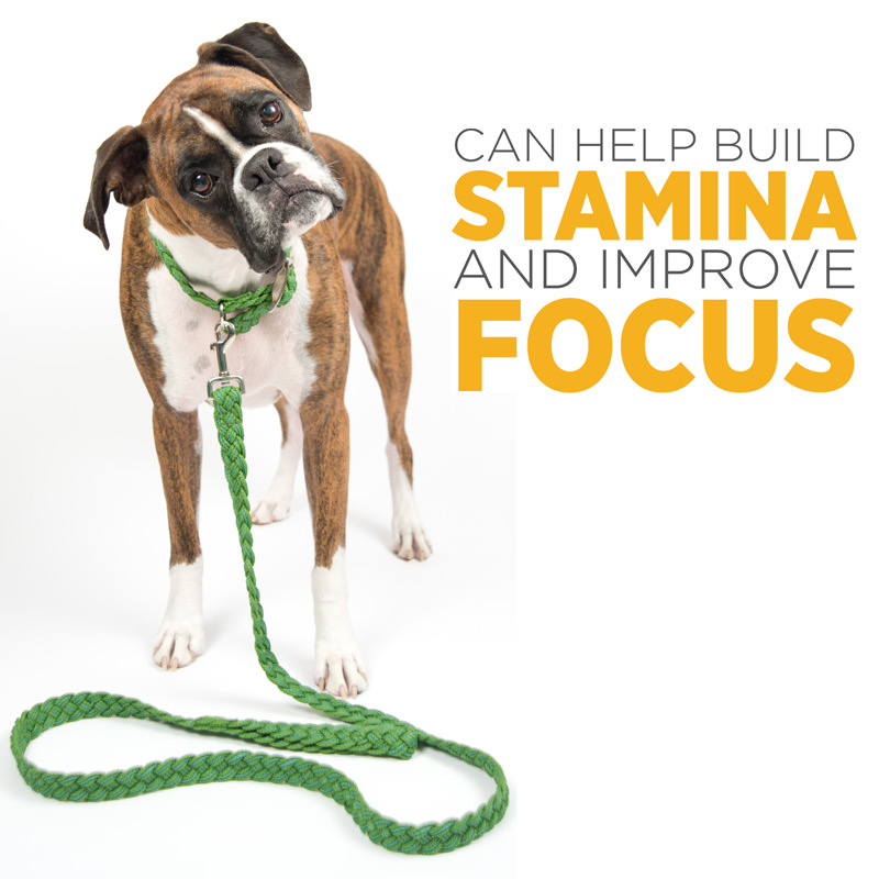 maxxicardio heart support for improved stamina and focus