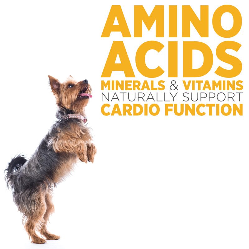 maxxicardio best ingredients for canine heart health