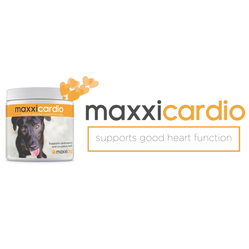 Video maxxicardio heart tonic for dogs